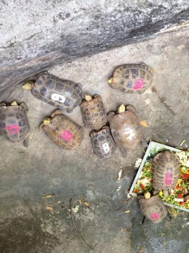 ChiangMaiZoo2011-62