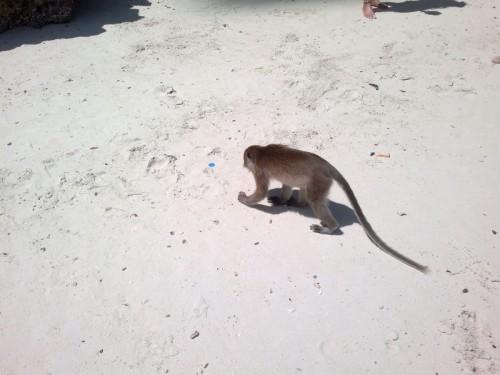 Phi Phi Islands2011-76