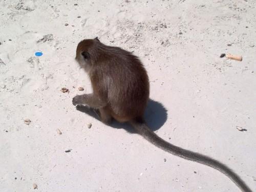 Phi Phi Islands2011-77