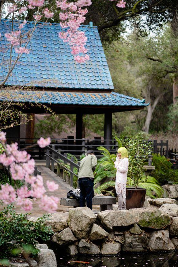 descanso garden cherry blossom