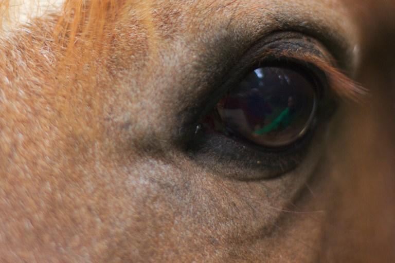Oeil équin