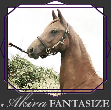 Akira Fantasize