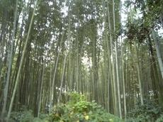 北野天満宮→嵐山.