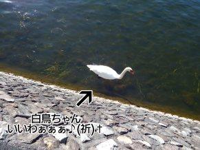 富士周辺アタック白鳥ちゃん03