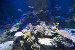 Red Lionfish tank