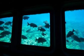 Nautilus glass bottom boat