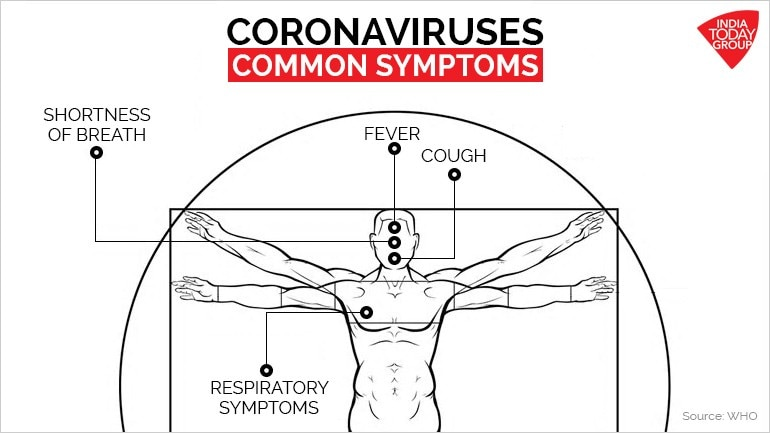 What is coronavirus? Here is your complete visual guide - SCIENCE News