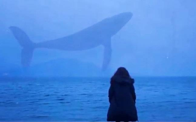 About Blue Whales Fact