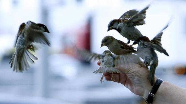 World Sparrow Day Where have the birds gone Here are a
