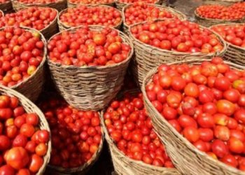 Pakistan may buy tomatoes from Iran as price skyrockets