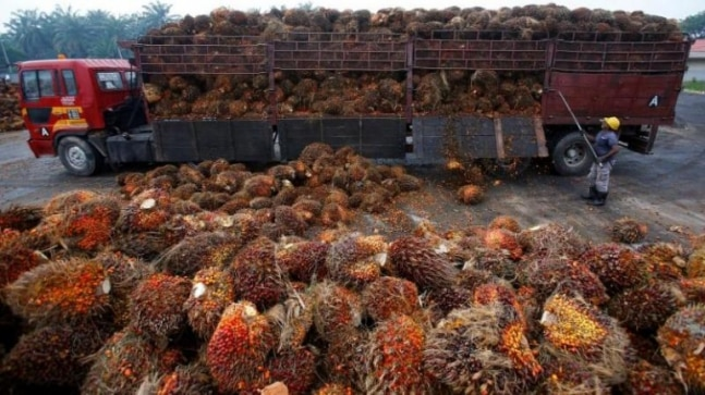Palm oil plantation staff subjected to 'outright slavery' in Malaysia, Indonesia