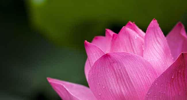 Gebze gergi tavan çiçek görsellerinde beğendiğiniz görsel hd kalitede baskıya alınır, bizimle iletişime geçin.