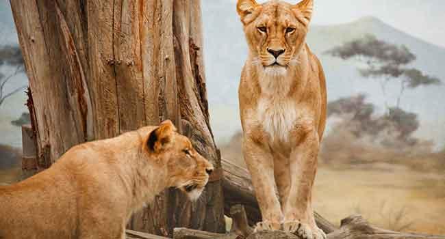 Gebze gergi tavan hayvanlar alemi görsellerinde beğendiğiniz görsel hd kalitede baskıya alınır, bizimle iletişime geçin.