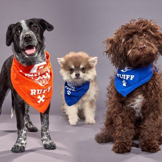 Meet All the Adorable Dogs Competing in the 2020 Puppy ...