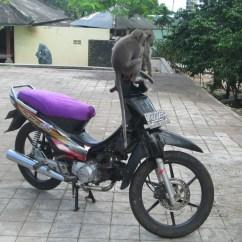 Swing Chair Ubud Portable Rocker Rice Terraces Of Tegalalang A Koala For Anna