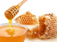 Pčele i med u svetim knjigama s posebnim osvrtom na kur'ansko kazivanje