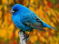 Sličnosti između ptica i ljudi: 'Sve ptice koje na krilima svojim lete svjetovi su poput vas'