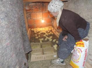 donacija-pilia-i-hrane-za-pilie-Hasib-Muji-niko-ne-radi-zive-od-80-km-socijale