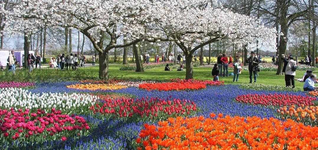 park tulipani