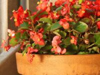 Cvijeće u kući: kako izabrati najbolje biljke za stan
