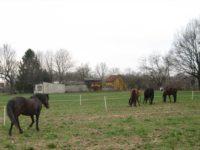 Osnovana je nova ergela bosanskog brdskog konja u Orašju