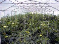 Besplatna edukacija o plasteničkoj proizvodnji i proizvodnji povrća