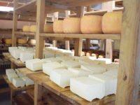 Brat i sestra vode uspješan posao u Tešnju: Otkupljuju do 2 mil. litara mlijeka i prave sir