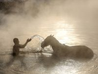 Tradicija u Turskoj: Kupanje konja i krava u toplim banjama
