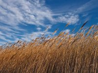 Dova prilikom puhanja jakog vjetra