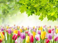 Proljeće: buđenje u nama i oko nas