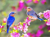 U susret proljeću: On oživljava zemlju nakon mrtvila njena