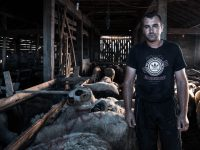Akcija Kurbani 2020 u Srebrenici: Od povratnika otkupljeno više od 600 kurbana