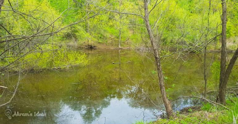 Turkey Mountain Pond