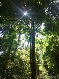 Hutan rumahku