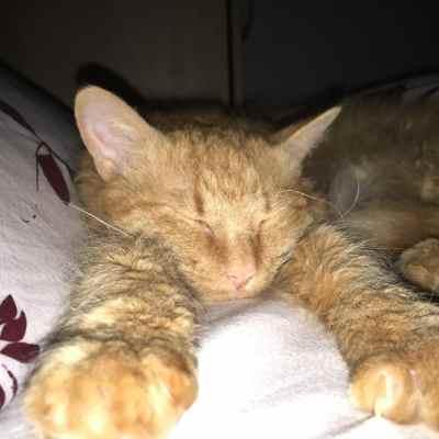 Flauschige Katze Spoiler pennt mit ausgestreckten Vorderpfoten