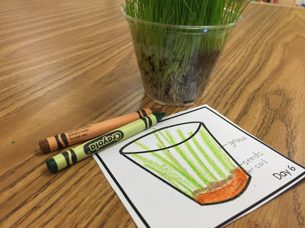 Jack And The Beanstalk And Planting Grass Seeds