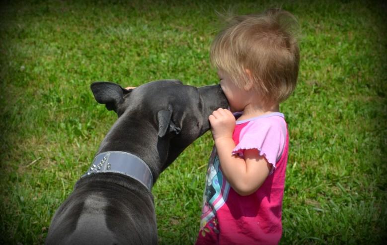 Thai Ridgeback Dog & baby