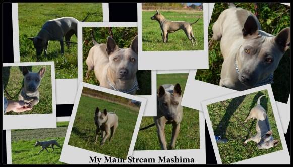My Main Stream Mashima