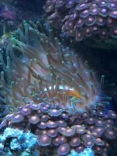 In dem großen Salzwasser-Aquarium war viel zu entdecken, gewiss nicht nur für Erwachsene interessant.