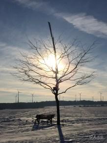 Baum und Bank - nahezu romantisch