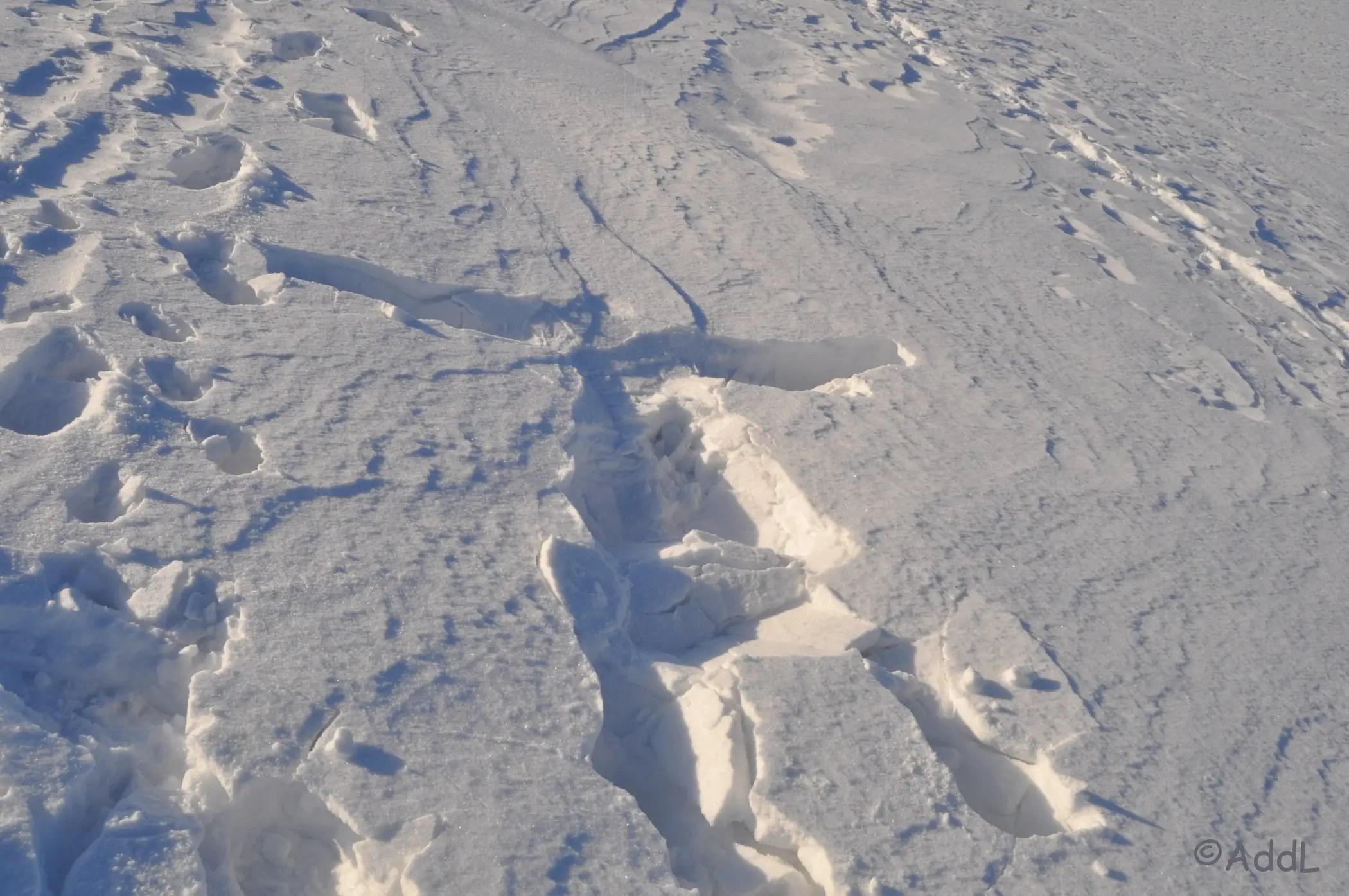 Spuren im Schnee - da warse...