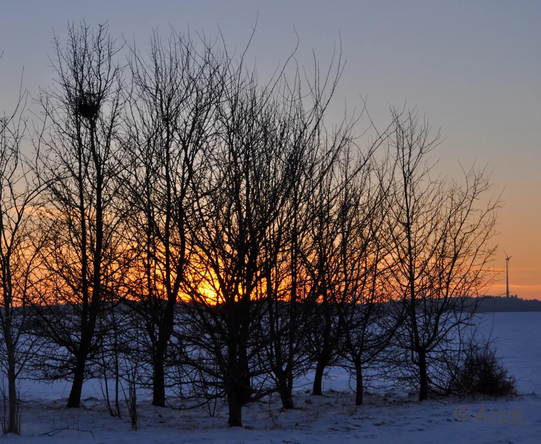 Die letzten Sonnenstrahlen in den Bäumen.