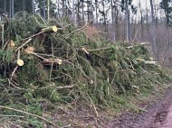 Nach der Abholzung