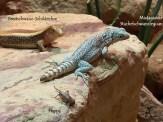Sehr interessante Tiere trafen wir im Reptilium.