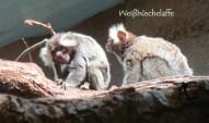 Ähm. Da musste die Kinder aber mal überlegen, was Affen denn für Tiere sind, Reptilien? Legen die Affen Eier?