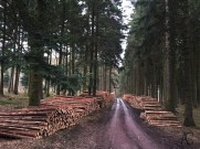 Viele Bäume wurden dieses Jahr gefällt.