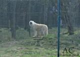 Ein heulender Wolf. Hörte sich fast ein wenig gruselig an.