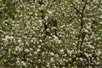 Millionen Blüten