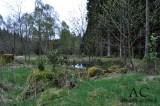 Die Vermoorung der Wälder soll vorangetrieben werden im neuen Nationalpark Hunsrück-Hochwald