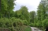 Nationalpark Hunsrück-Hochwald bei Hattgenstein